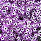 Explosion of Purple by HelmD