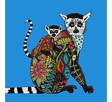 ring tailed lemur love blue Photographic Print