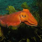 Giant Cuttle by Edjamen