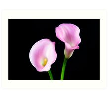 Two Pink Calla Lilies Art Print