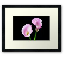 Two Pink Calla Lilies Framed Print