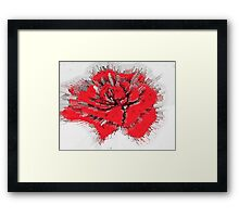 Bursting Rose Framed Print