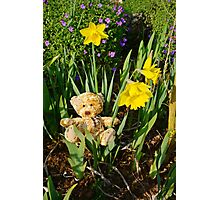 Basking In The Daffodils Photographic Print