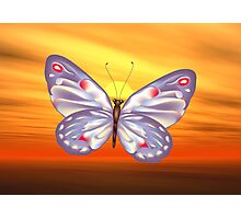 Bright Butterfly Photographic Print