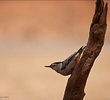 Is This My Best Side by Christianne Gerstner