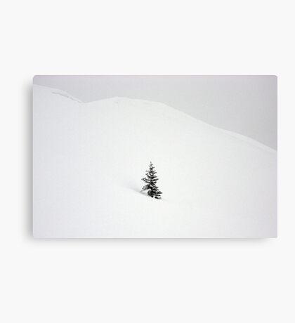 Little Snow Tree Canvas Print