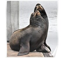 Sea Lions On Hyde Street Pier Poster