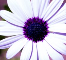 White Daisy with purple center Sticker