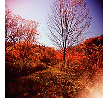 Fall Path Photographic Print