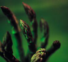 Asparagus by Marie Watt