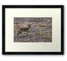 "The Coyote Project - ""Pawsed"" Framed Print"