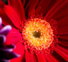 Red daisy Sticker