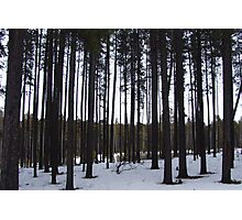 Cypress Hills Photographic Print