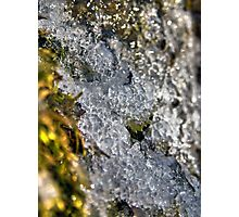 Ice Encrusted Moss Photographic Print