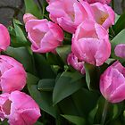 spring pink purple tulip flowers. floral garden photography. by naturematters