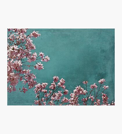 Pink Apple Blossoms on Teal Blue Green Sky Photographic Print