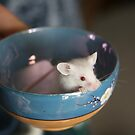 Teacup Mouse by Jaymilina