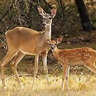 Mama and Baby Deer by kellimays
