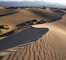 Mesquite Dunes #8 by Winthrope Hiers