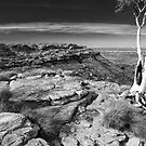 Ghost Gum Over Kings Canyon by Steven Pearce