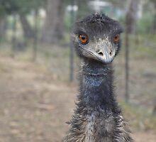 Emu by Barbara Helps