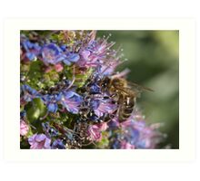 Bee at work... Art Print