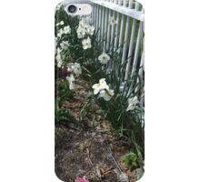Spring Narcissus iPhone Case/Skin