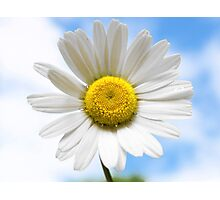 Nothing but Blue Sky and Daisies Photographic Print