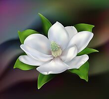 Magnolia Flower by lydiasart