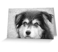 Ted. Greeting Card
