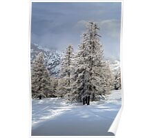 snow and tall trees Poster