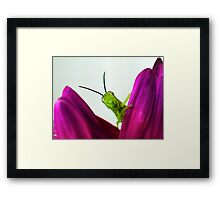 Oh - hello... Framed Print