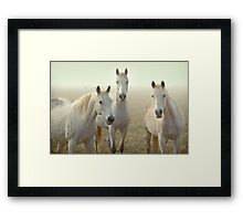 Three Whites Framed Print