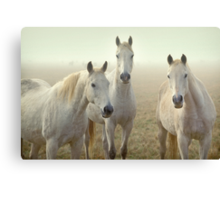 Three Whites Canvas Print