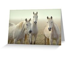 Three Whites Greeting Card