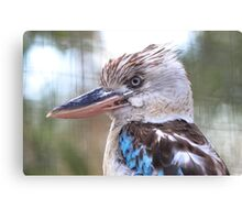 Blue Winged Kookaburra V Canvas Print