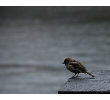 Wet Feathers Photographic Print