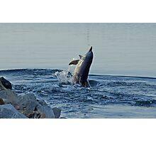 Dolphin Photographic Print