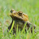 Froggy by mc27