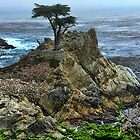 The Lone Cypress by Brett Williams