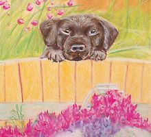 Cute puppy looking over the fence by EWhitesideArt
