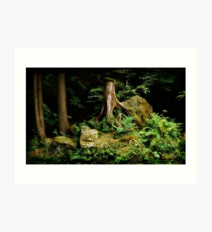 Forest Stump Art Print