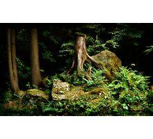 Forest Stump Photographic Print