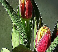 Tulips Water Colored by Jonice