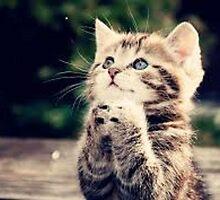 Very Cute Cat Praing by energeticmelon3
