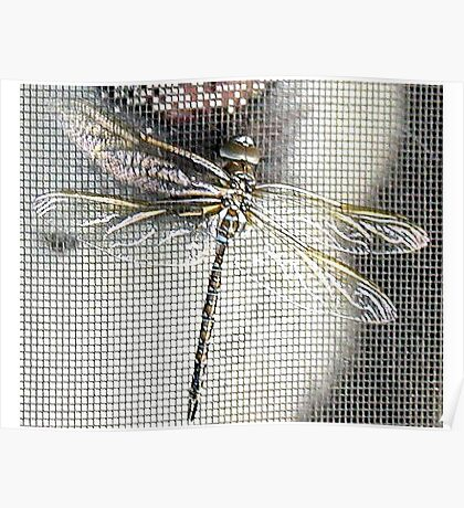 DRAGON FLY ON THE SCREEN  Poster