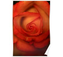 Rose Softness Poster