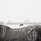 Horses in snow by Chris Jorgensen