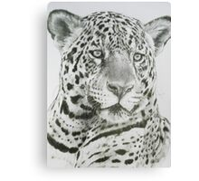 Placate Canvas Print