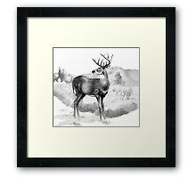 White-tail Stag Sniffing the Air Framed Print